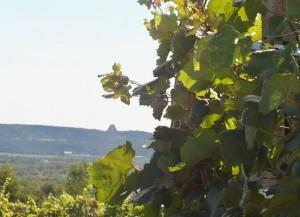 Vini01